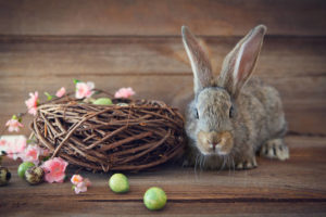 Easter Bunny Hops Into an American Tradition
